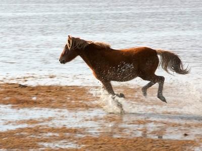 Wild Horse Glee