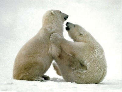 Polar Attraction