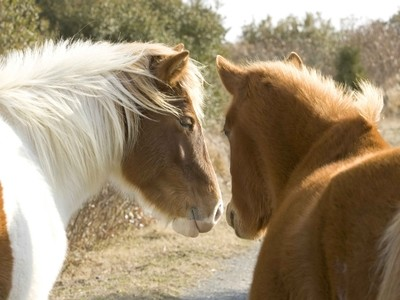 Equine Friends Forever