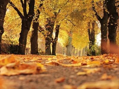 Fall Magic