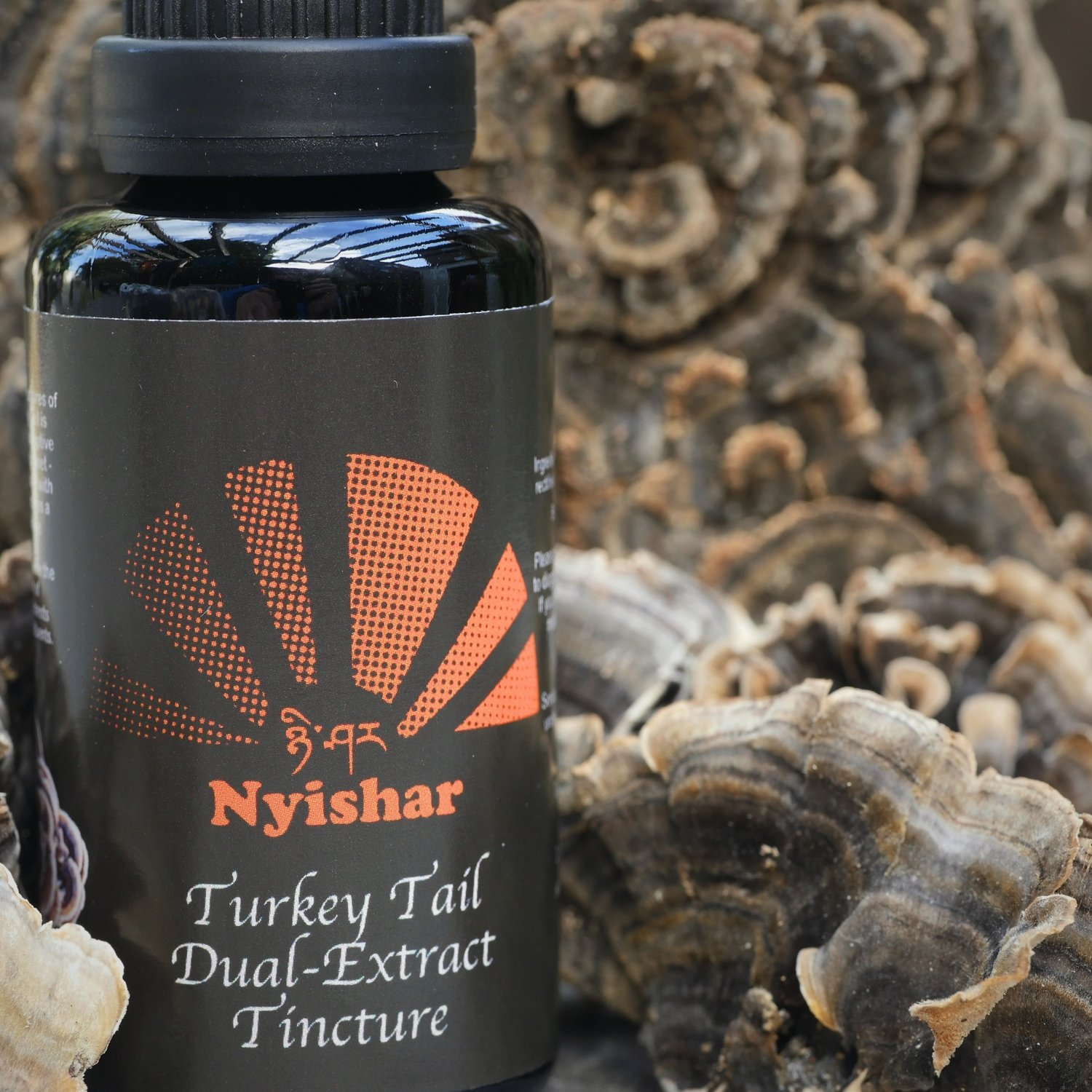 Turkey Tail Dual-Extract - 30ml