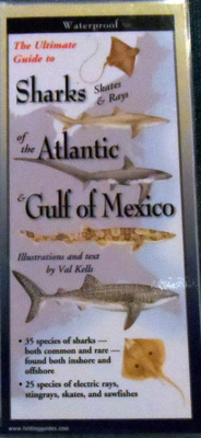 Field Guide to Sharks (Skates & Rays) of the Atlantic and Gulf of Mexico