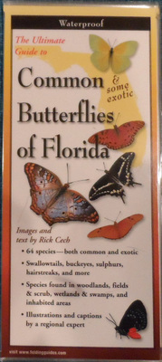 The Ultimate Guide to Common & some exotic Butterflies of Florida