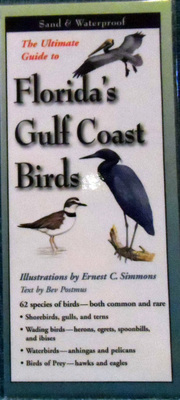 The Ultimate Guide to Florida's Gulf Coast Birds