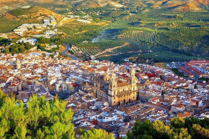 Spanish Picual - Single Varietal EVOO