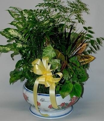 Dish Garden in Ceramic