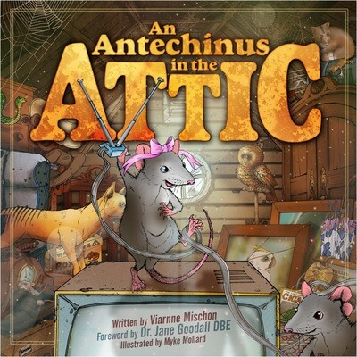 An Antechinus in the Attic
