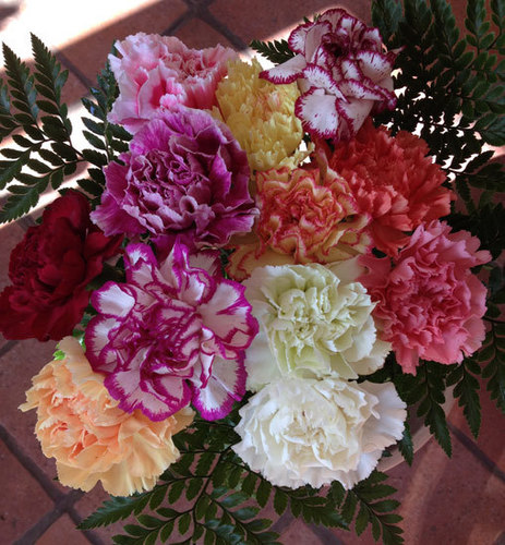 12 Mixed Carnations