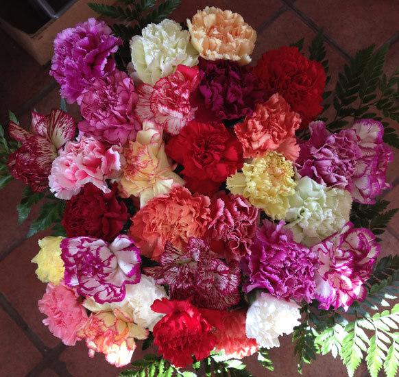 30 Mixed Carnations