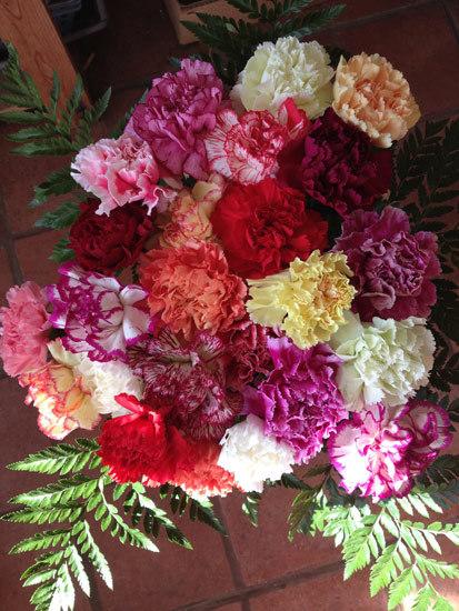 24 Mixed Carnations