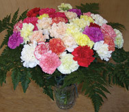 36 Mixed Carnations