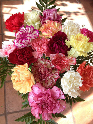 18 Mixed Carnations