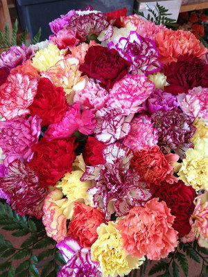 60 Mixed Carnations