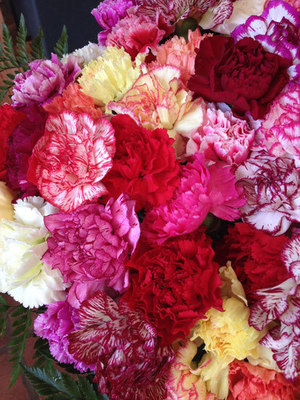 50 Mixed Carnations