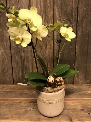 Orchidee mit Wachteleier