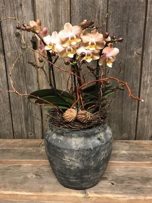 Orchidee ausgeschmückt