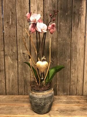 Orchidee mit Herz ausgeschmückt