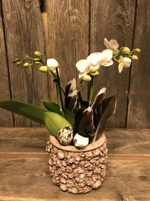 Orchidee mit Wachteleier und Federn
