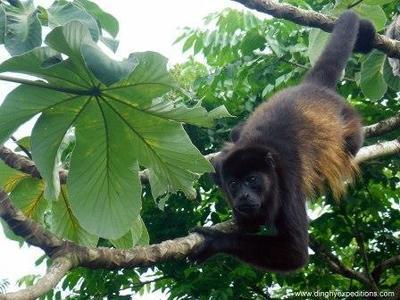 Wildlife Safari Float Trip & Natural History Tour