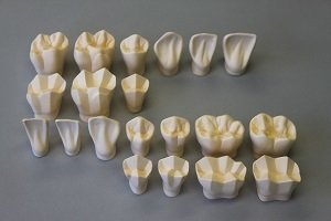 Набор трехмерных моделей зубов (20 шт.)