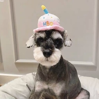 Birthday Cake Hat, also a squeaky toy
