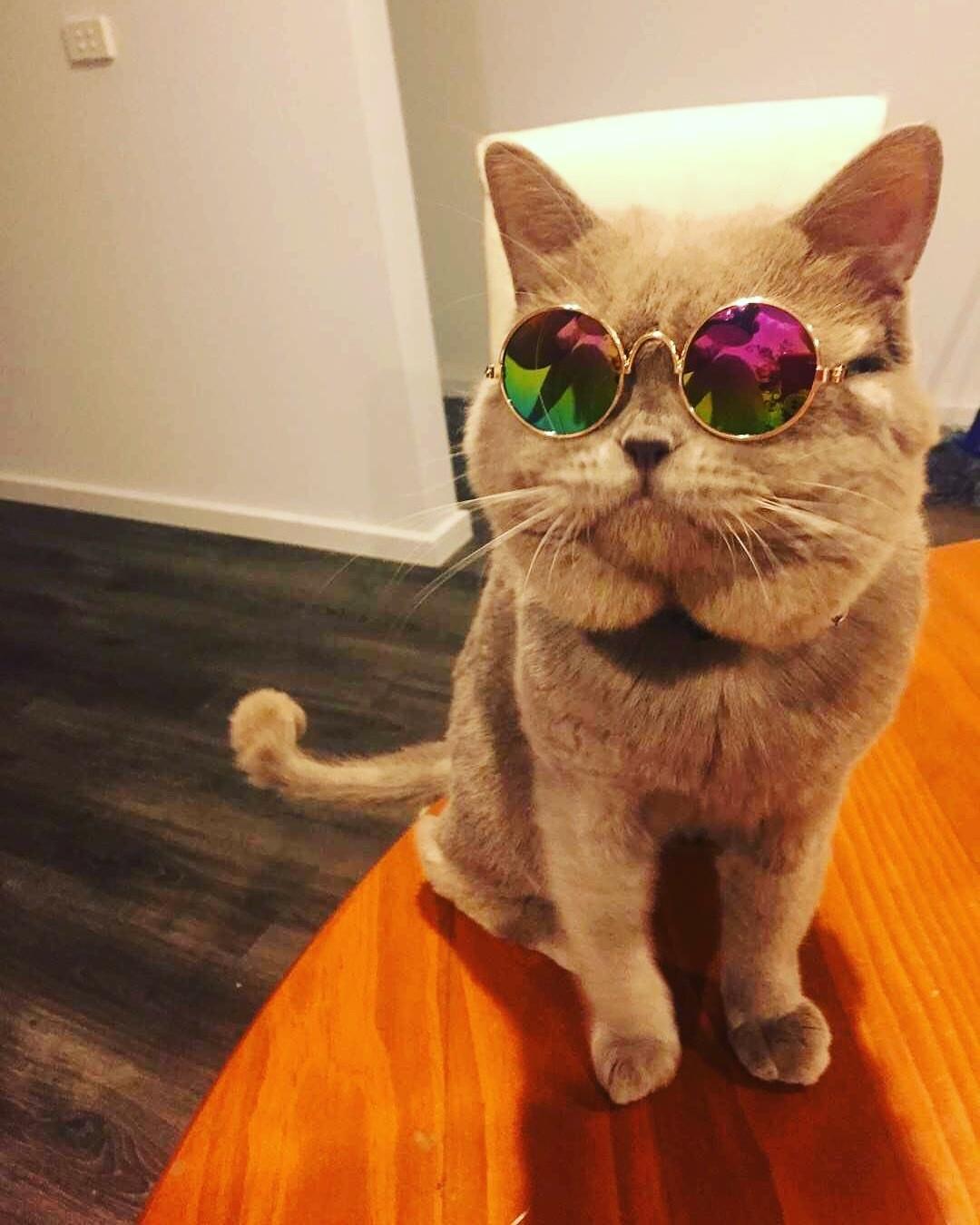 Cool Sunglasses Shades