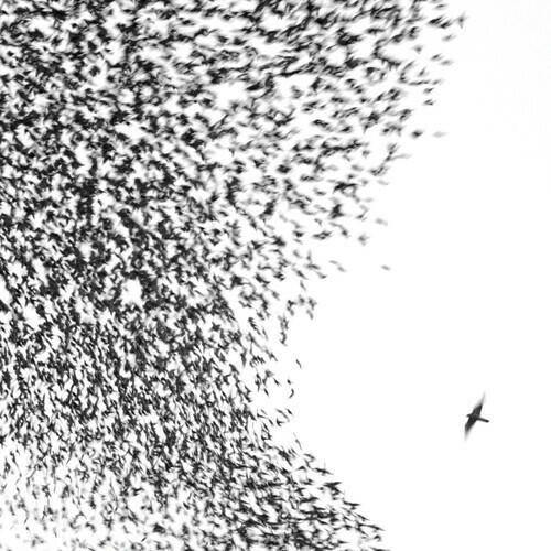 Wilco / Sky Blue Sky