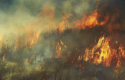 Early season prescribed burn