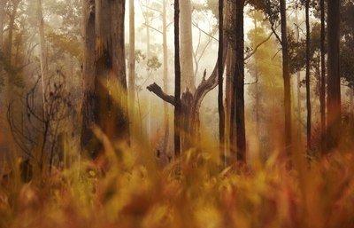 Endangered wet sclerophyll forest