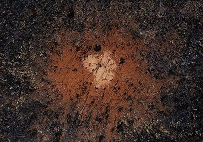 Ant hole in fire scar