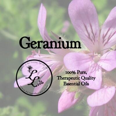 Geranium (Pelargonium x asperum)