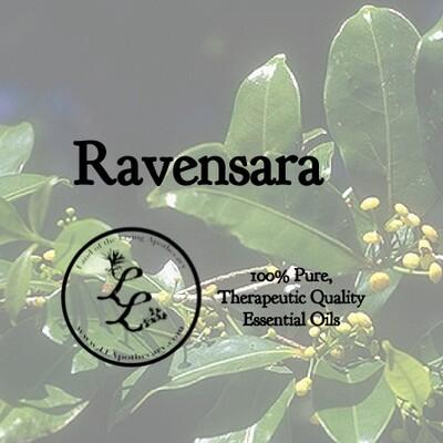 Ravensara, Wild (ravensara aromatica)
