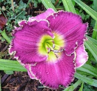 Violet Etching