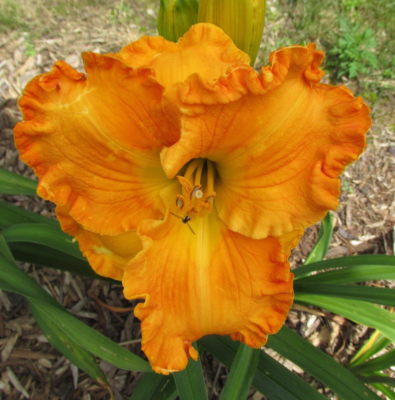 Orange Blossom Trail