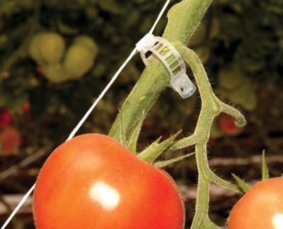 Anillos para tomate 23mm Paska