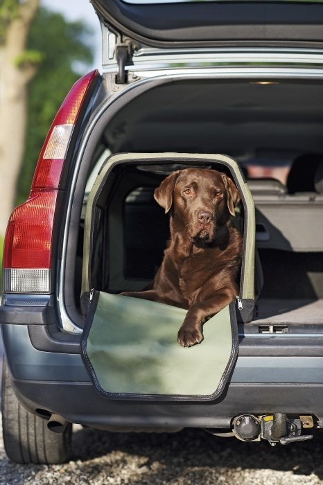 transporter box for dog