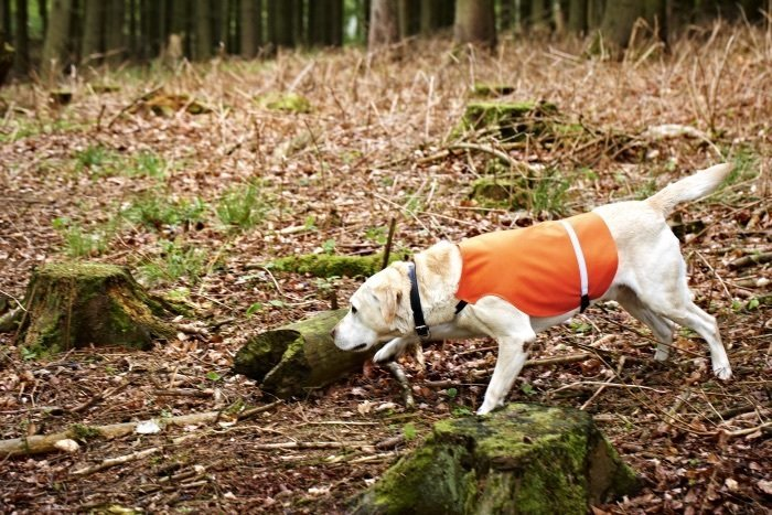 dog waistcoat w/relective band