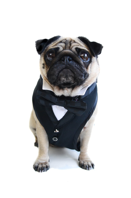 The 007 Tuxedo