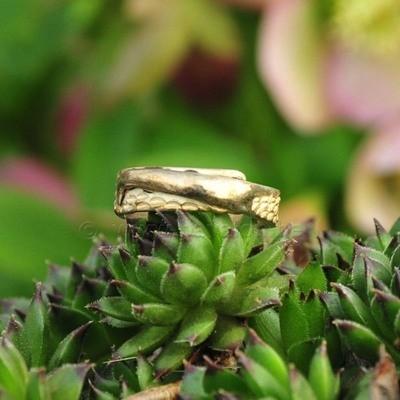 Ring in massief zilver - UNICA - Alex Fabry (België) - Maat57,5