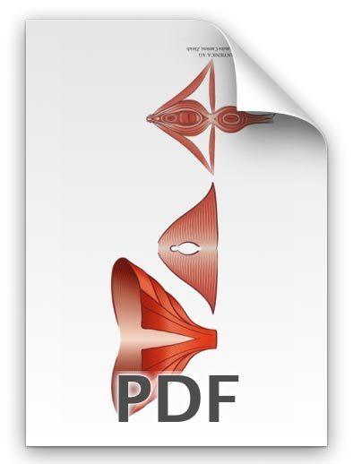 PDF: Beckenbodenmuskeln Frau
