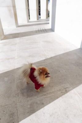 Red Velvet Jacket
