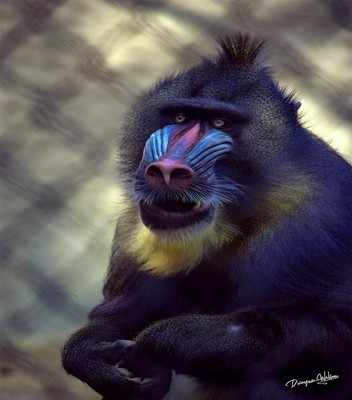 Mandrill  --  starting at