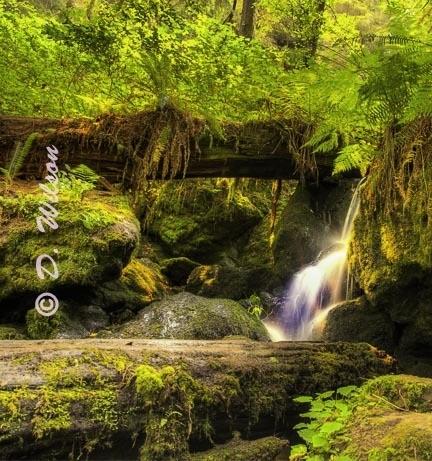 Trillium Falls 3  --  starting at