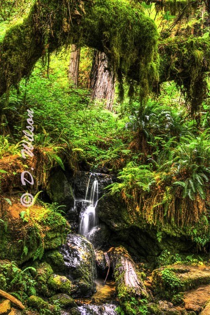 Enchanted Forest --  starting at