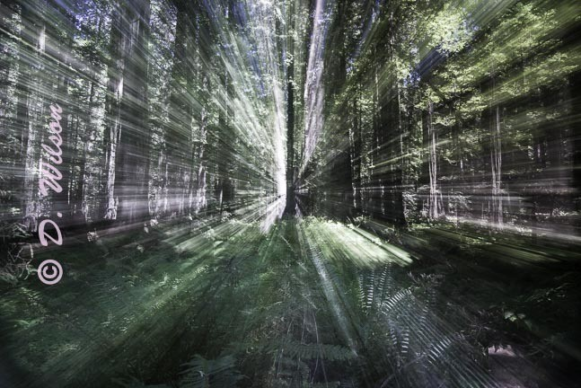 Going into the Light - Redwoods, Ca  --  starting at