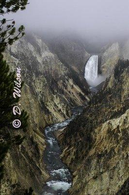 Yellowstone Lower Falls 1, Wy --  starting at