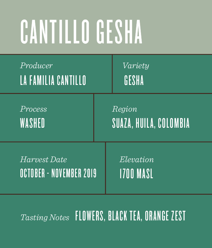 Familia Cantillo Gesha