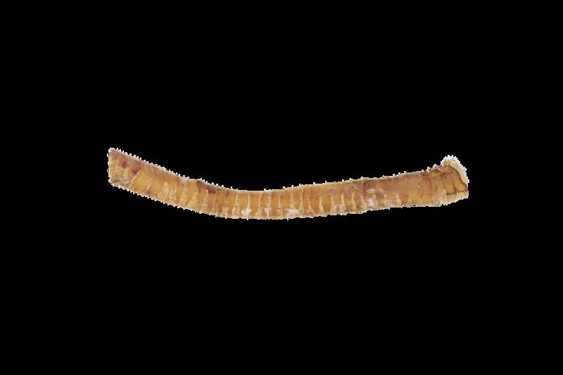 Bison Trachea Medium Strip