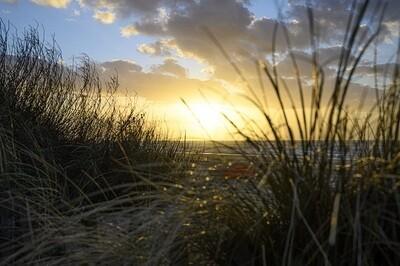 Gras in zeereep Zandvoort - print op canvas