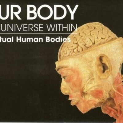 Our Body - The Universe Within